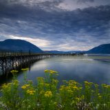 Wharf and summer foliage along Shuswap Lake, Salmon Arm, BC